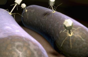 Бактериофаги представляют собой вирусы, которые поражают определенный вид бактерий. Фото: MedicalRF.com/Getty Images.