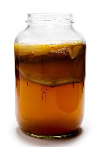 Чайный гриб (Medusomyces Gisevi), японский гриб, морской квас или чайная медуза. Фото с сайта okofinista.ru