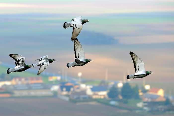 Солнечная электростанция в Калифорнии губит птиц. Фото: PHILIPPE HUGUEN/AFP/Getty Images
