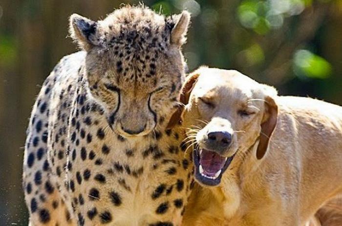 Каши (слева) и Мтани (справа) дружат с тех пор, как были вместе с рождения. Фото: YouTube