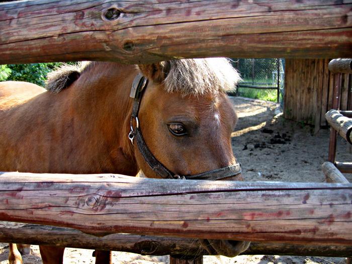 Лошади обладают интеллектуальными способностями. Фото: Ирина Рудская/Великая Эпоха (The Epoch Times)
