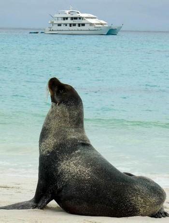 Морской лев наблюдает за катамараном. Фото: Бернд Крегель