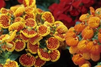 Цветущие орхидеи острова Мартиника. Фото: Photo.com