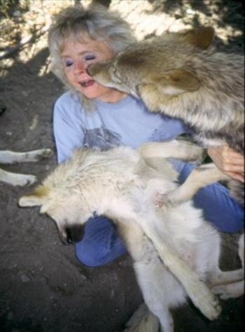 Нэнси Тэйлор, владелец Wolf People, играющая с волками. Фото предоставлено Джоном Кристофером Файном