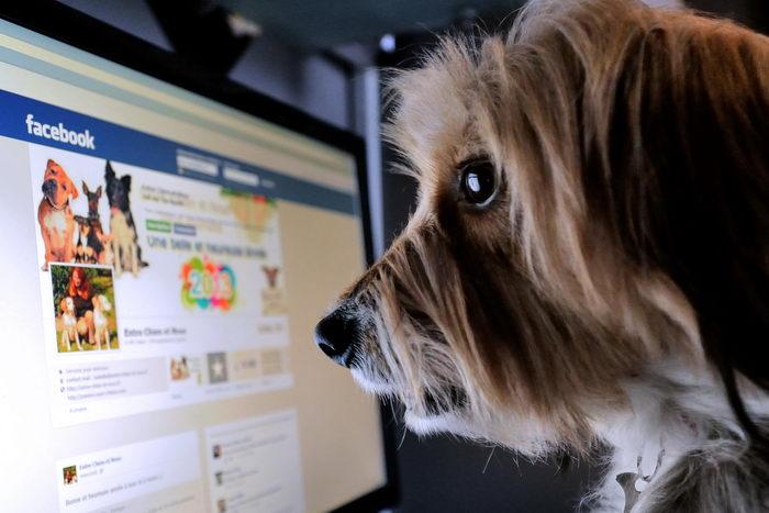 Facebook, как пример удачного стартапа. Фото: DENIS CHARLET/AFP/Getty Images