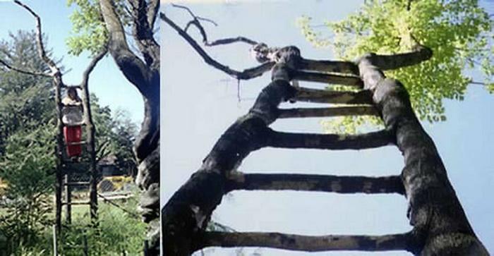 Дерево-лестница Акселя Эрландсона. Фото с сайта wikimedia.org