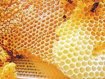 Пчеловодство. Фото с сайта liveinternet.ru