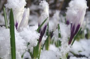 Приход весны. Фото с сайта segodnya.ua