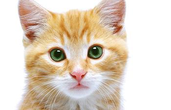 Фото с сайта http://www.zooclinica.ru/