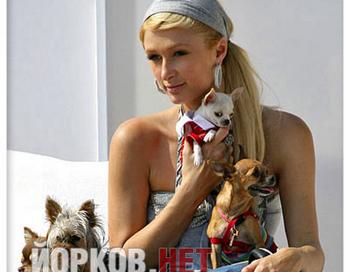 Фото с сайта www.yorkov.net/