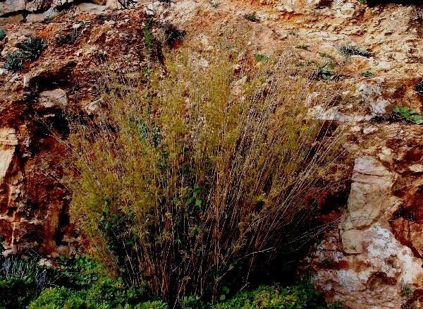 С Таней Шимель по ботаническому Иерусалиму. Бамбук. Фото: Hava Tor. Великая Эпоха (The Epoch Times)