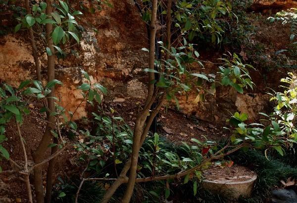 С Таней Шимель по ботаническому Иерусалиму. Фотиния. Фото: Hava Tor. Великая Эпоха (The Epoch Times)
