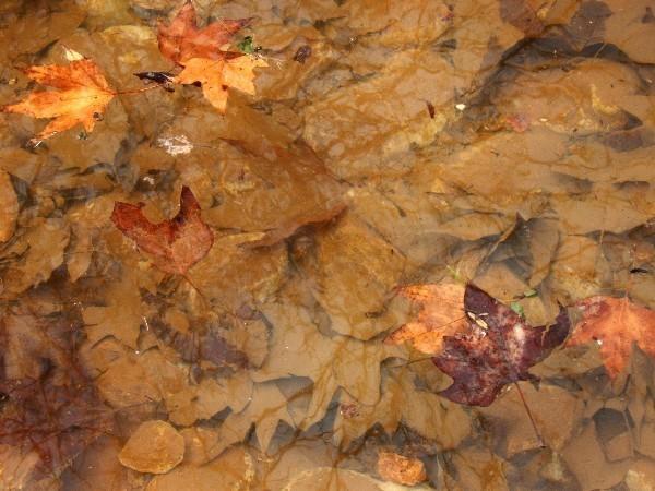 С Таней Шимель по ботаническому Иерусалиму. Прошлогодние листья платана в пруду. Фото: Hava Tor. Великая Эпоха (The Epoch Times)
