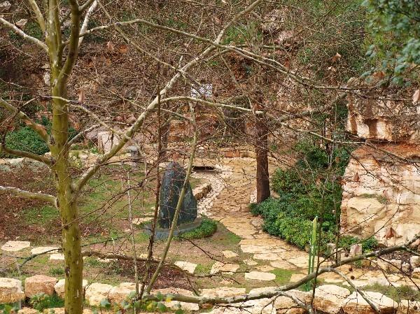 С Таней Шимель по ботаническому Иерусалиму. Платан сбросил кору и листву. Фото: Hava Tor. Великая Эпоха (The Epoch Times)