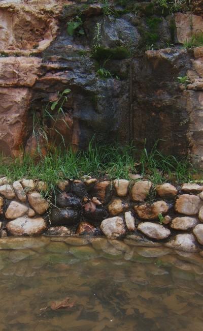 С Таней Шимель по ботаническому Иерусалиму. Источник. Фото: Hava Tor. Великая Эпоха (The Epoch Times)