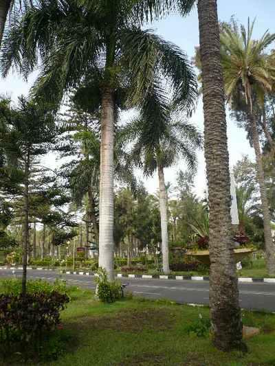 Александрия. Белые королевские финиковые пальмы. Фото: Елена Захарова/Великая Эпоха (The Epoch Times)