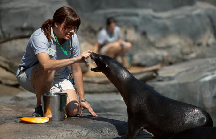 Животные в Смитсоновском зоопарке после реконструкции. Фото: Allison Shelley/Getty Images