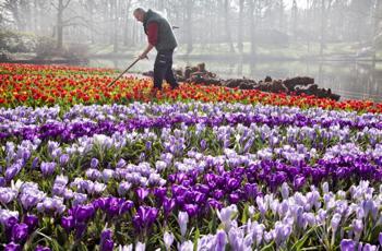 Лучшие сады мира. Кекенхоф, Лиссе, Голландия. Фото: KOEN SUYK/AFP/Getty Images