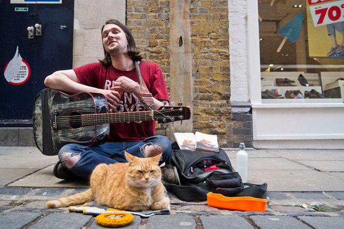 Рыжий кот Боб. Фото: fresher.ru