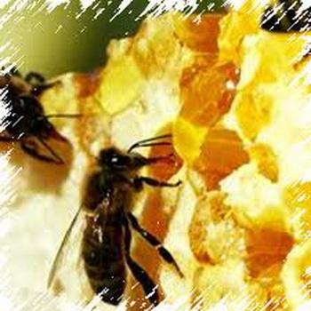 Полезные свойства и область применения мёда. Фото: subscribe.ru
