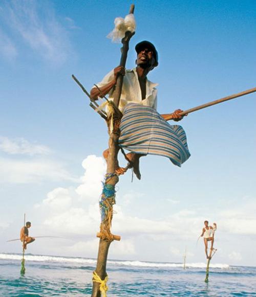 Страна чудес по имени Шри-Ланка. Фоторепортаж. Фото: elephantours.com