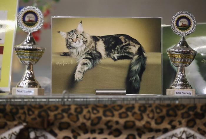 Выставка животных в Берлине. Фото: Sean Gallup/Getty Images