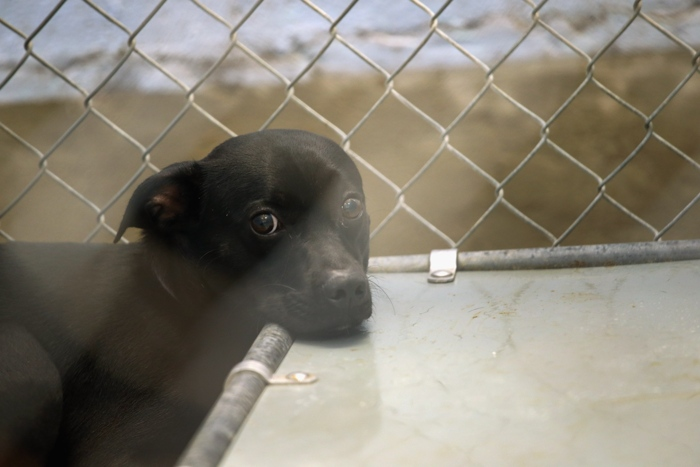 Животные, травмированные во время урагана Isaac  в приюте Нового Орлеана. Фоторепортаж. Фото: John Moore/Getty Images