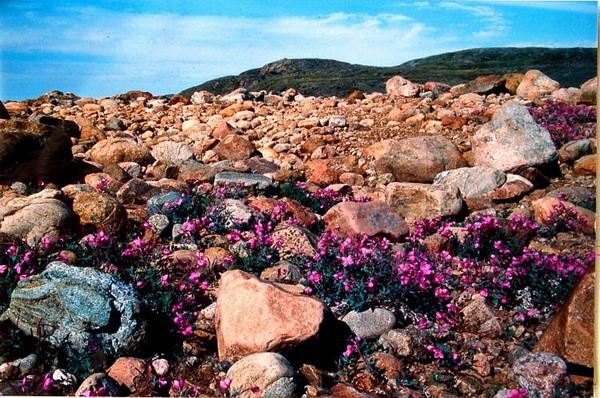 Безлюдная красота: эти растения и цветы появляются на голом граните, заставляя вас удивляться, как они растут?  Фото с сайта  theepochtimes.com