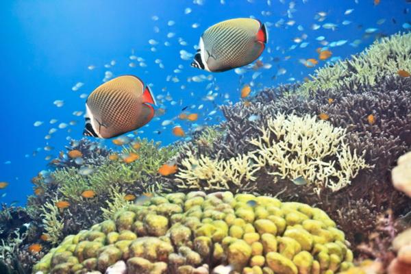 Мальдивы. Фото: Martin Valigursky/Photos.com