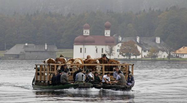 Часовня Святого Варфоломея пользуется популярностью у художников и туристов, проезжающих на лодке по красивому озеру Кенигзее. Но один раз в год насладиться видом могут и коровы. Фото с сайта  epochtimes.de