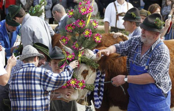 Баварские горные фермеры украшают своих животных, перед тем как отгонят их с сочных летних пастбищ в горах обратно на зимовку. Фото с сайта  epochtimes.de