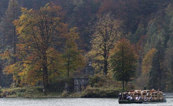 На фестивале Альмабтриб скот переправляют лодкой через Кёнигзее. Фото с сайта epochtimes.ru