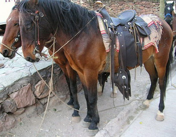 Лошади Серокауи:  хорошо обученные лошади у водопада Серокауи Уикочи.  Фото с сайтаtheepochtimes.com