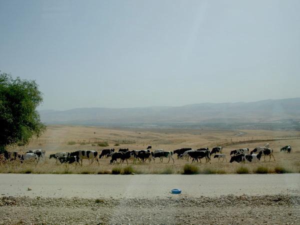 От Иерусалима до Афулы через Иорданскую долину. Иорданская долина. Фото: Хава ТОР/Великая Эпоха