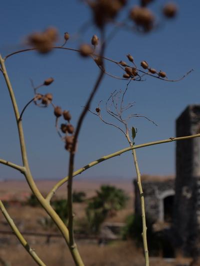 От Иерусалима до Афулы через Иорданскую долину. Бейт-Шаан. Фото: Хава ТОР/Великая Эпоха