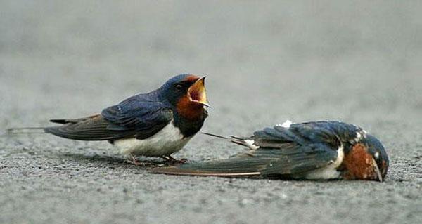 И у птиц есть чувства. Фото с сайта ba-bamail.co.il