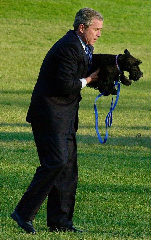 Президент США Джордж Буш с собакой Барни на Южной лужайке Белого Дома, 4 апреля 2002 года. Фото: Mike Theiler / Getty Images