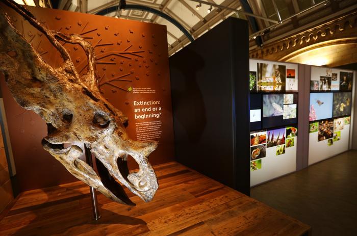 Череп динозавра. Фото: Peter Macdiarmid/Getty Images