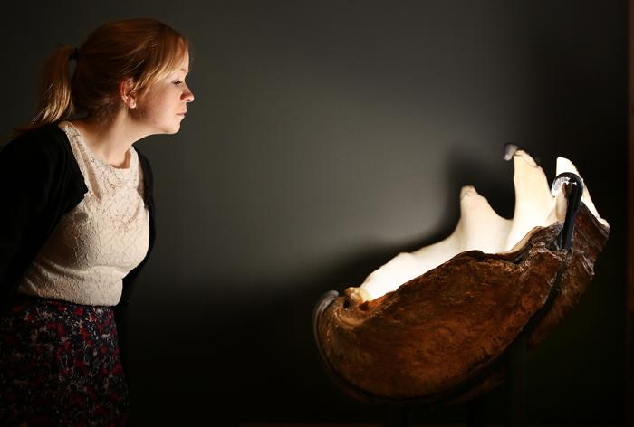 Гигантский маллюск. Фото: Peter Macdiarmid/Getty Images