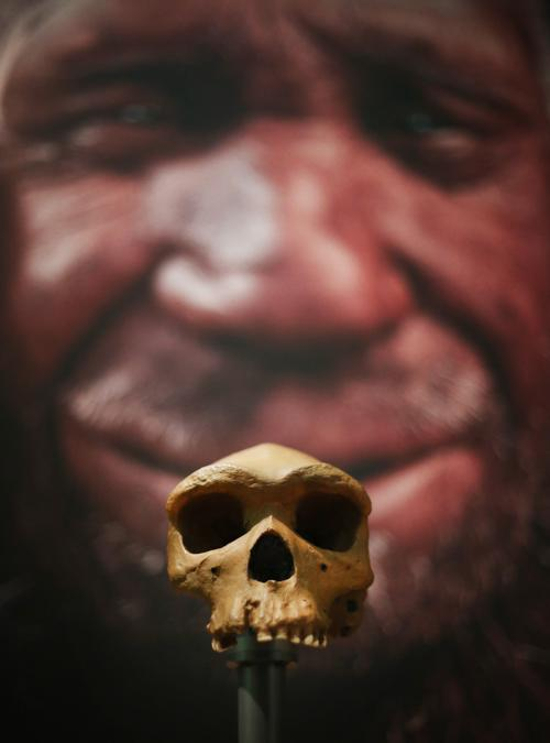 Человеческий череп. Фото: Peter Macdiarmid/Getty Images