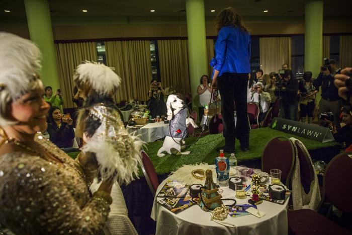 Модные собаки. Фото: Michael Nagle/Getty Images
