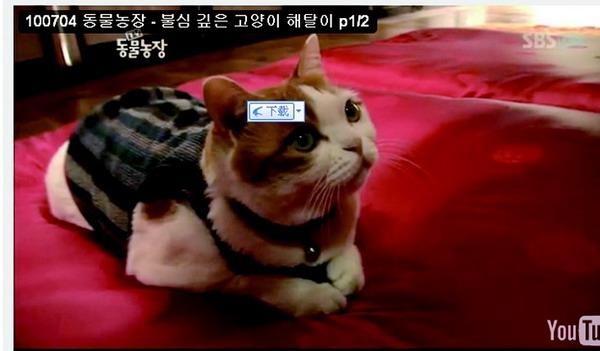 В Южной Корее в храме живет кошка-буддист. Фото: Ютуб