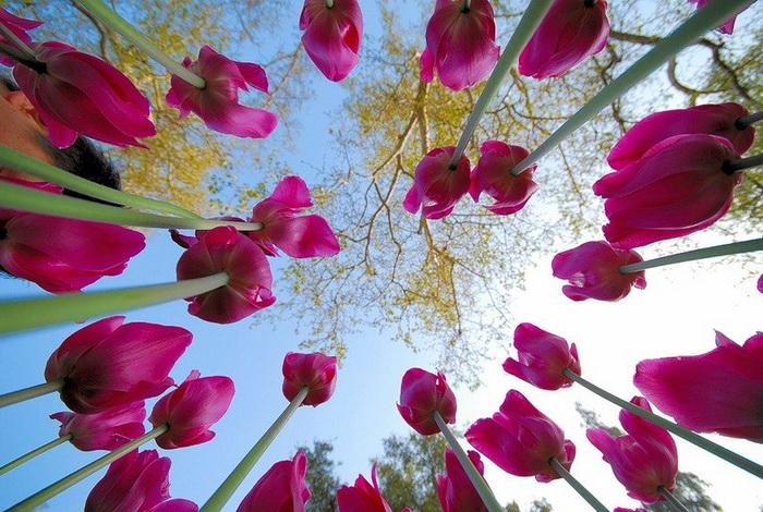 Где растут самые красивые цветы? Фото с romantic-online.com