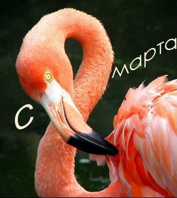 Как поздравить своих женщин с 8 марта? Фото с cruzo.net