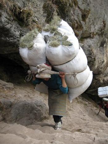 Альпинистам теперь запрещено восхождение на Эверест без гида-шерпа. Фото с 7summits.ru