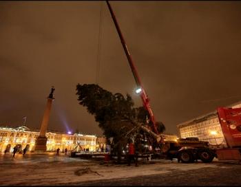 Установление ёлки на Дворцовой площади. Фото с сайта http://www.baltinfo.ru