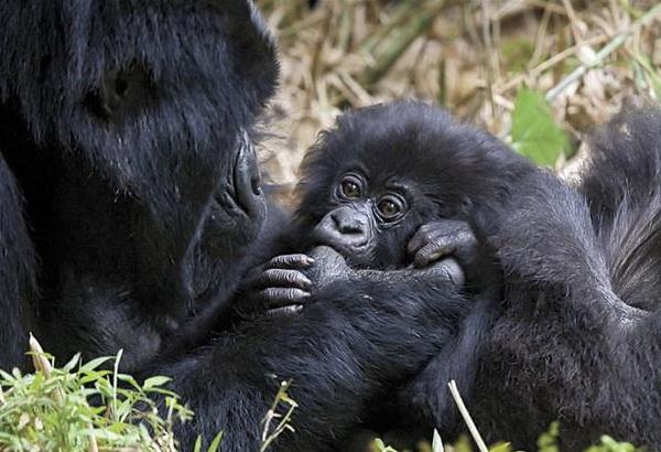 Материнство в дикой природе. Фото с сайта ba-bamail