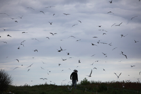 Дикая природа острова Фарн. Фото: Dan Kitwood/Getty Images