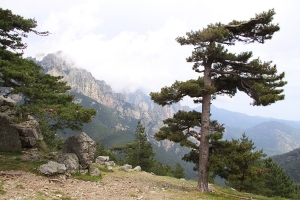Корсиканские Альпы: зубчатые гранитные вершины Егвий де Бавелла. Фото с сайта lagrandeepoque.com