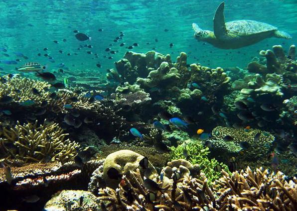 Аквалангисты, не пропустите! Остров Сипадан в Малайзии. Фото с сайта Ba-bamail